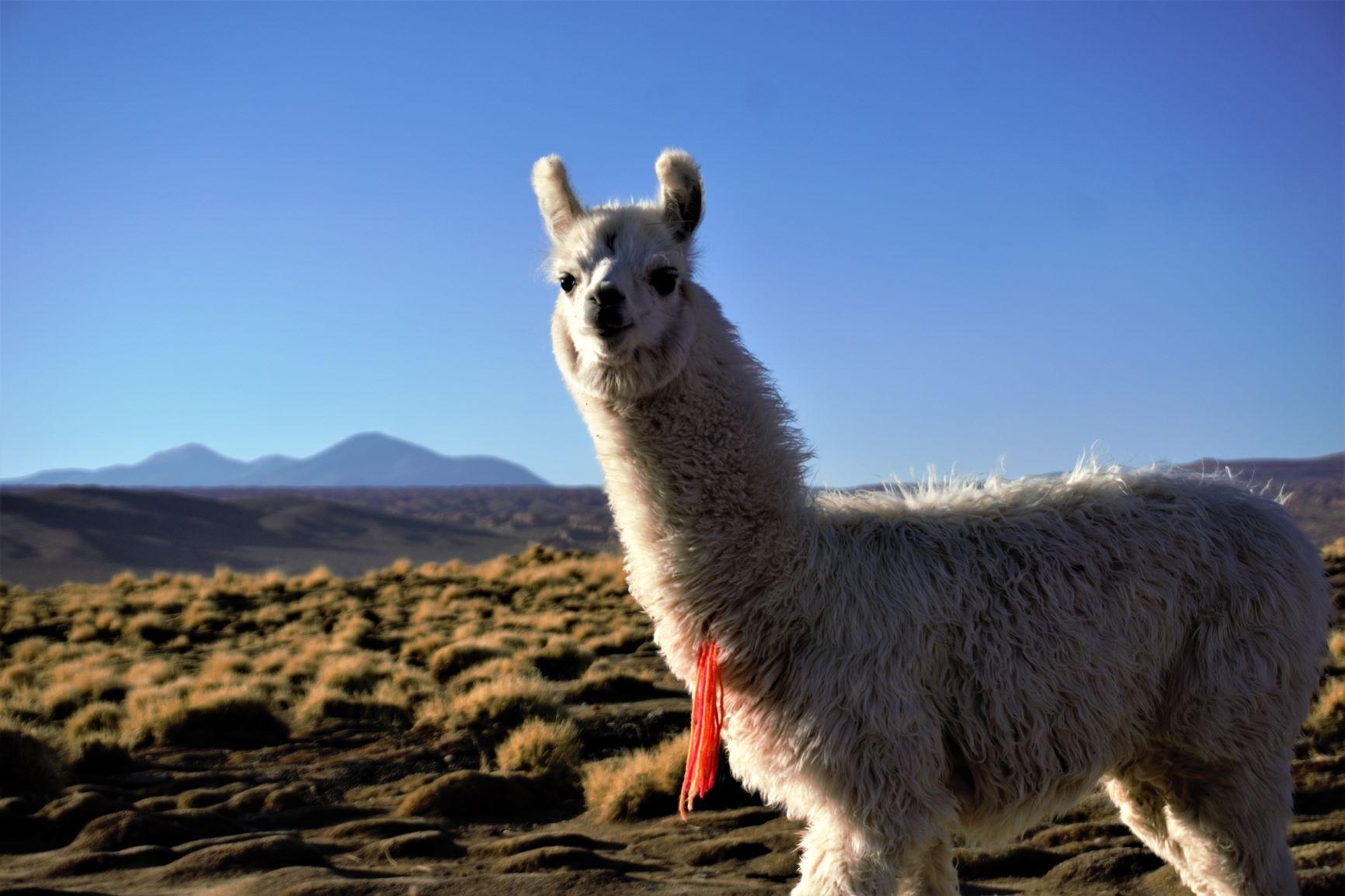 Bolivia e Chile, encantada!